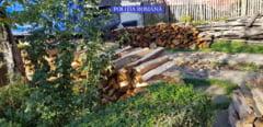Trei barbati, sanctionati de oamenii legii pentru transport ilegal de material lemnos