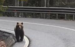 Trei urşi au apărut în localitatea Bicaz Chei, în momente diferite