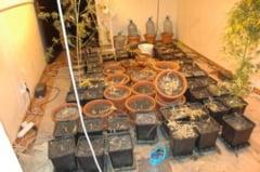 Trimis in judecata pentru cultivare si detinere de droguri de risc