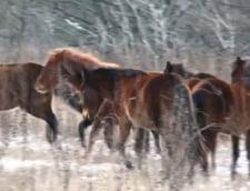Tulcea: Proiect pentru protejarea Padurii Letea si a cailor semi-salbatici