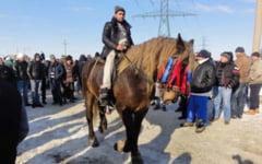 Tupeu de hot: prins de politisti cand se plimba pe strada cu un cal furat. Tanarul a fost retinut de politisti