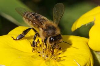 UE interzice pesticidele care omoara albine