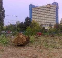 UPDATE: Masacru verde in Sectorul 1, probabil cu stiinta lui Chiliman