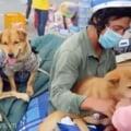 Uciderea a 13 câini ai căror stăpâni aveau COVID-19 a stârnit valuri de furie în Vietnam