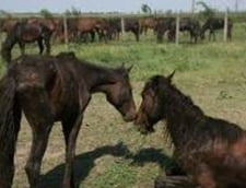 Udrea a semnat ca va proteja caii salbatici de la Letea