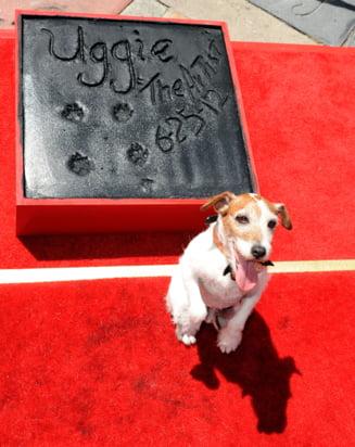 Uggie, cainele vedeta din filmul ''The Artist'', recompensat cu premiul Palm Dog