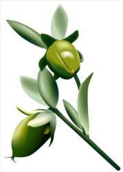 Uleiul de jojoba, un adevarat produs cosmetic