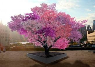 Un arbore Frankenstein cu 40 de feluri de fructe? Da. Exista!