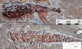 Un atac brutal de acum 200 de milioane de ani, fosilizat pentru vesnicie. De ce au murit pradatorul si victima inclestati