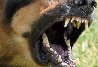 Un barbat a fost SFASIAT de caini in Campia Turzii