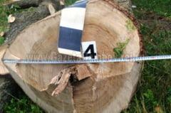 Un barbat din Cobia, depistat de jandarmi la taiere ilegala de arbori