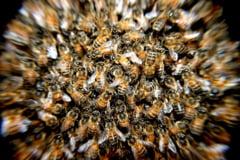 Un barbat din Iasi a murit dupa ce a fost atacat de un roi de albine