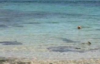 Un caine a muscat un rechin (Video)