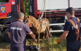 Un cal care cazuse intr-o groapa, salvat de pompierii din Urziceni