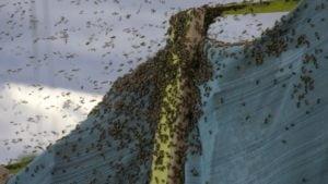 Un camion cu 133 de milioane de albine s-a rasturnat in Montana