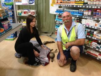 Un cangur ranit s-a ratacit in farmacia unui aeroport (Video)