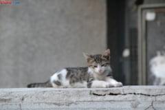 Un cleric nu mai vrea sa vada poze cu pisici: Asa ceva e interzis!