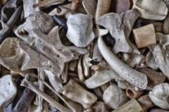 Un copil a gasit o bucata de craniu uman pe un camp din judetul Iasi