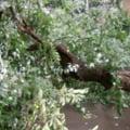 Un copil de cinci ani din Lunca Bradului a murit după ce un copac smuls de furtună a căzut peste el. Un altul se află în stare gravă la spital