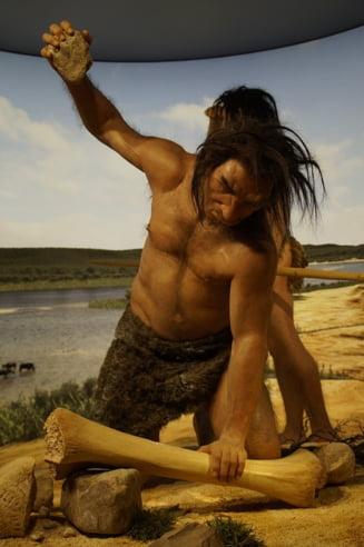 Un craniu de 400.000 de ani ar putea elucida misterul evolutiei omului