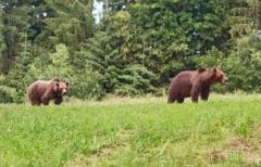 Un demnitar cere alocarea de fonduri europene pentru gestionarea situației urșilor