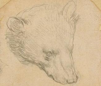 Un desen al lui Leonardo da Vinci ar putea fi vandut pentru 12 milioane de lire sterline