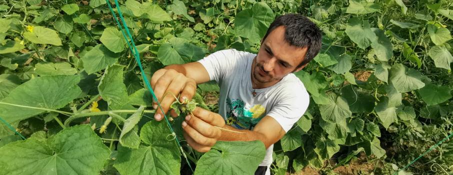 Un fermier bio din Prahova cultiva legume proaspete cate 48 de saptamani pe an. Iata secretul lui