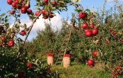 Un fermier britanic dezvaluie cati bani a platit sa aduca muncitorii romani si ce salarii ofera