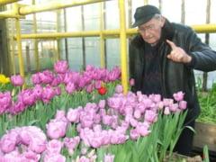 Un florar de 91 de ani a pregatit 100.000 de zambile si lalele pentru Martisor: Daca m-as opri, nu as trai mai mult de cateva zile