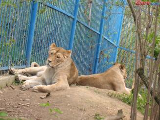 Un incendiu a izbucnit la adaposturile Circului Globus din Bucuresti - mai multe animale au murit UPDATE
