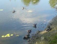 Un lac din Bucuresti a inceput sa sece dupa ridicarea unui bloc turn