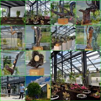 Un loc feeric: A fost inaugurata sera cu plante exotice de la Gradina Botanica Bucov