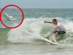 Un nou sport extrem: Surfing cu rechini