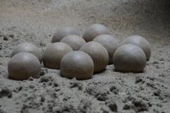 Un nou tip de ou de dinozaur fosilizat a fost descoperit in China (Foto)