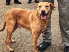 Un ofiter american a fost retrogradat dupa ce si-a abandonat cainele-politist