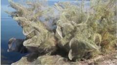 Un oras din Grecia a fost acoperit de panze de paianjen (Video)