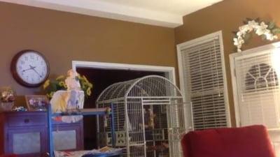 Un papagal, traumatizat de divortul stapanilor: Cum reactioneaza (Video)