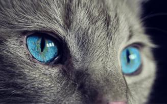 Un parazit luat de la pisica ne poate face sa suferim de schizofrenie
