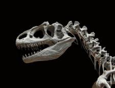 "Un schelet de allosaurus, considerat ""bunicul"" lui T-Rex, in licitatie la Paris"