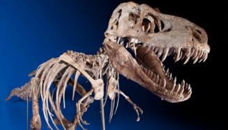 Un schelet de dinozaur provenit din Mongolia a fost returnat acestei tari