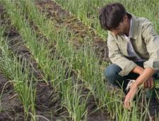 Un specialist in marketing din Galati cultiva ceapa si morcovi bio: Agricultura a evoluat, poti creste legume si fara chimicale