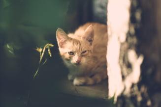Un tanar care a strans o pisica de gat cu un siret si a aruncat-o de la etajul doi, trimis in judecata pentru schingiuirea animalelor