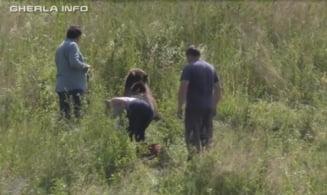 Un urs a fost lasat sa moara pe marginea drumului dupa ce a fost lovit de o masina. Soferul sustine ca nu a putut evita impactul VIDEO