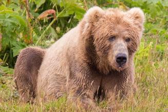 Un urs le-a stricat fotografiile de nunta in cel mai amuzant mod cu putinta (Foto)