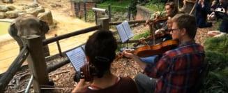 Un zoo a decis sa-si distreze elefantii cu muzica live. Cum reactioneaza animalele (Video)