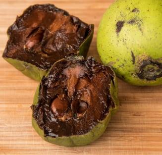 Una dintre cele mai ciudate, dar delicioase plante de pe Terra: I se spune budinca de ciocolata!
