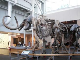 Unde au trait ultimii mamuti si de ce au disparut