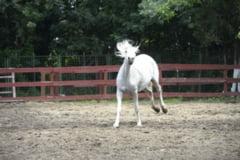 Unde poti merge, in Bucuresti, sa-ti plimbi gratuit copilul cu calul - Poti deveni voluntar si invata si tu sa calaresti Interviu