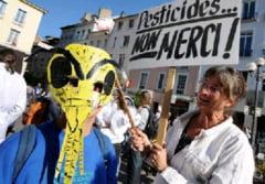 Uniunea Europeana doreste sa interzica pesticidele care distrug albinele
