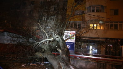 Urmarile codului portocaliu din Bucuresti: Copaci si stalpi cazuti, 49 de masini avariate (Foto)